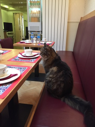 He sits right in front of the table setting