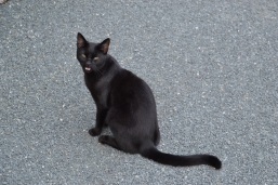 Playful black kitty at St. Canice's in Kilkenny