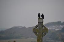 Ravens on a celtic cross
