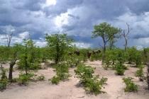 Elephants in the trees