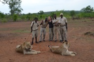 Lion handlers and guides