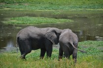 Elephant secrets