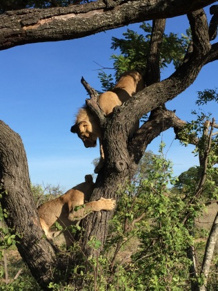 Africa and Alika in a tree