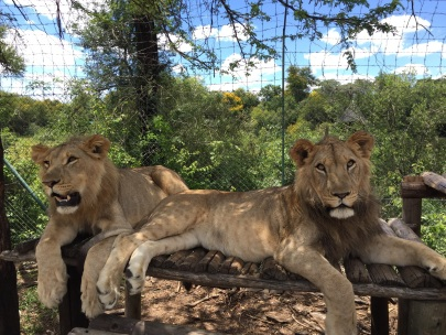 Amani and Arusha