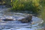 Water wrestling