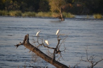 Egrets enjoying the sun