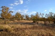In the Zambezi