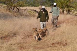 Walking with Herbert & Jonathan