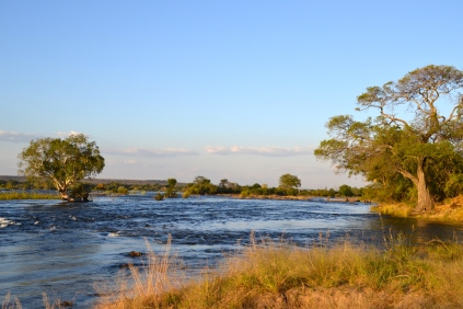 Zambezi river in the golden sun