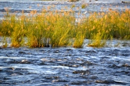River grass in the sun