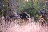 Blurry shot of a sable and babies