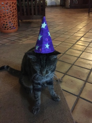 Wizard kitty