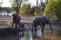 Family time at the watering hole