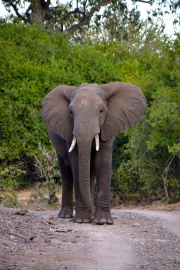 African roadblock