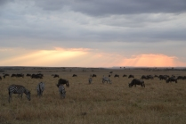 Sun rays over the Mara