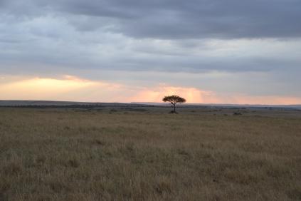 The lone acacia
