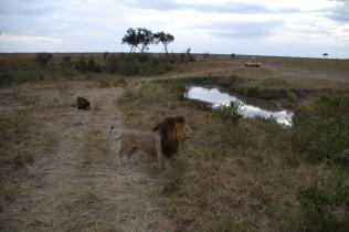 Surveying his land