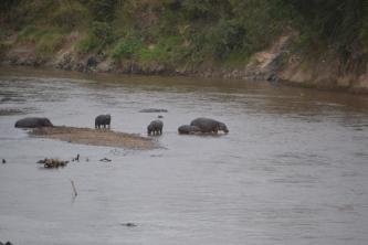 Hippo sand bar
