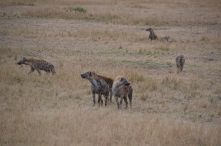 Hyena clan coming out of the den