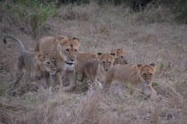 Female and cubs
