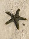 Cool starfish