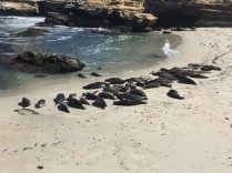 Seals resting on the beach