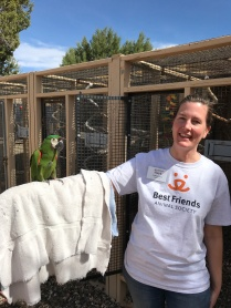 With Templeton, a severe macaw parrot