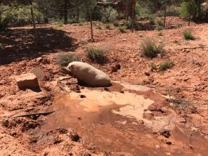 Diesel enjoying a mud bath