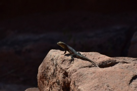 Lizard in the sun